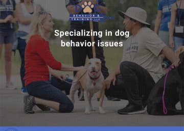 Tally Dog Behavior - WPTallahassee, Tallahassee Web Design